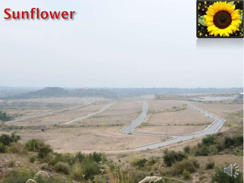 """DHA vallay 4 Marla Commrcial Plot""""Sunflower"""" For Sale"""